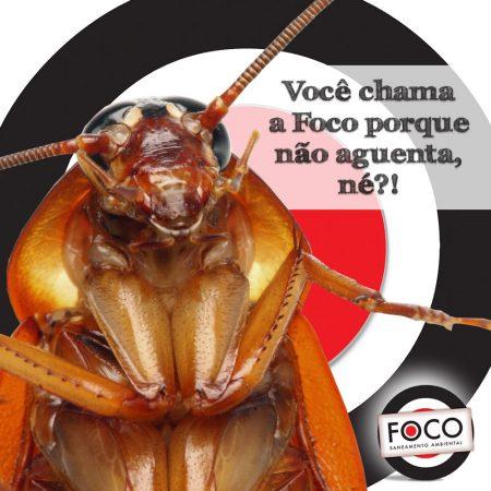 Foco – Posts